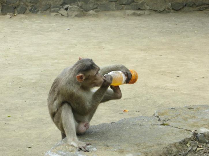 Elephanta Monkey 3